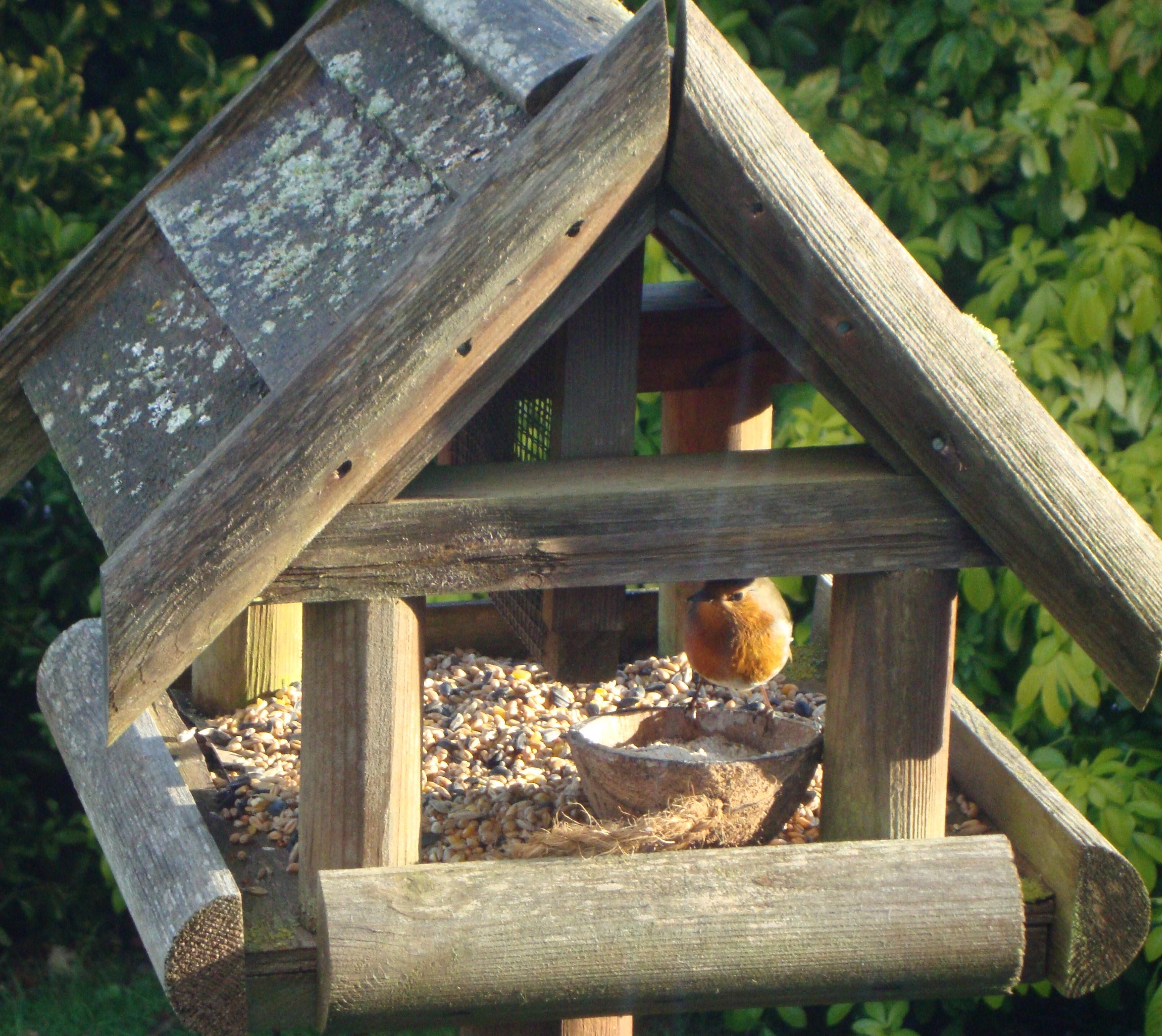 robin-on-birdtable.jpg