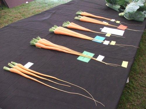 Carrot class