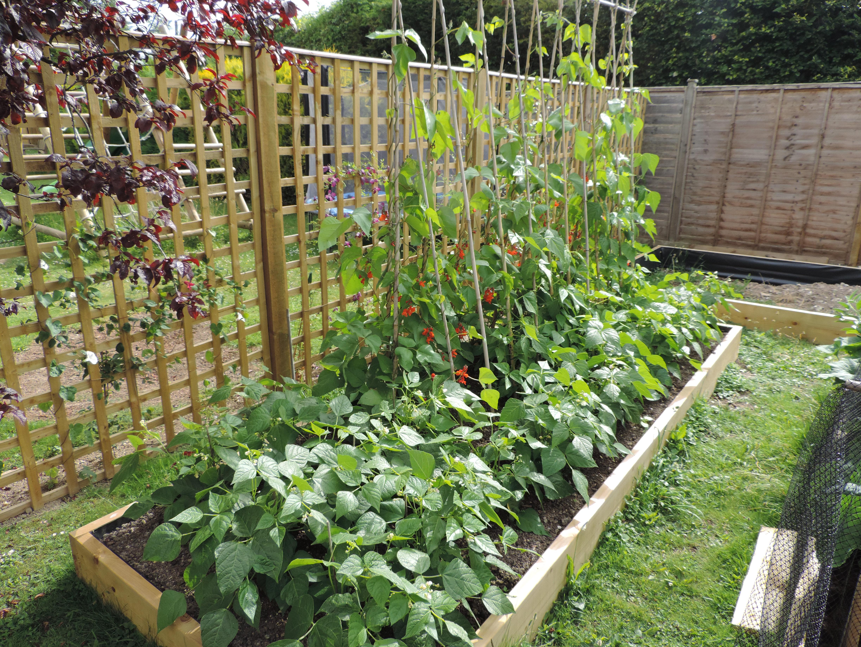cauliflower | Two Chances Veg Plot Blog
