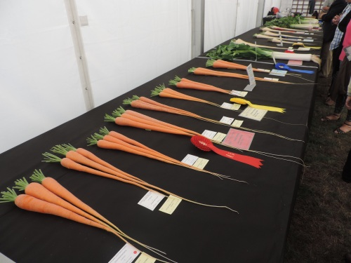 Long carrot display